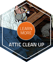 Attic Cleaning Insulation Company Installer Insulation